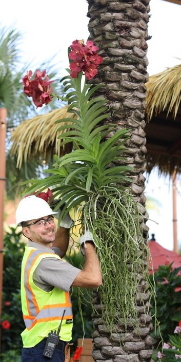 Technical Services Team Member arranging plants on a palm tree.
