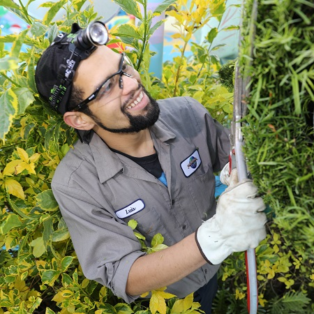 Technical Services Team Member trimming landscape plants