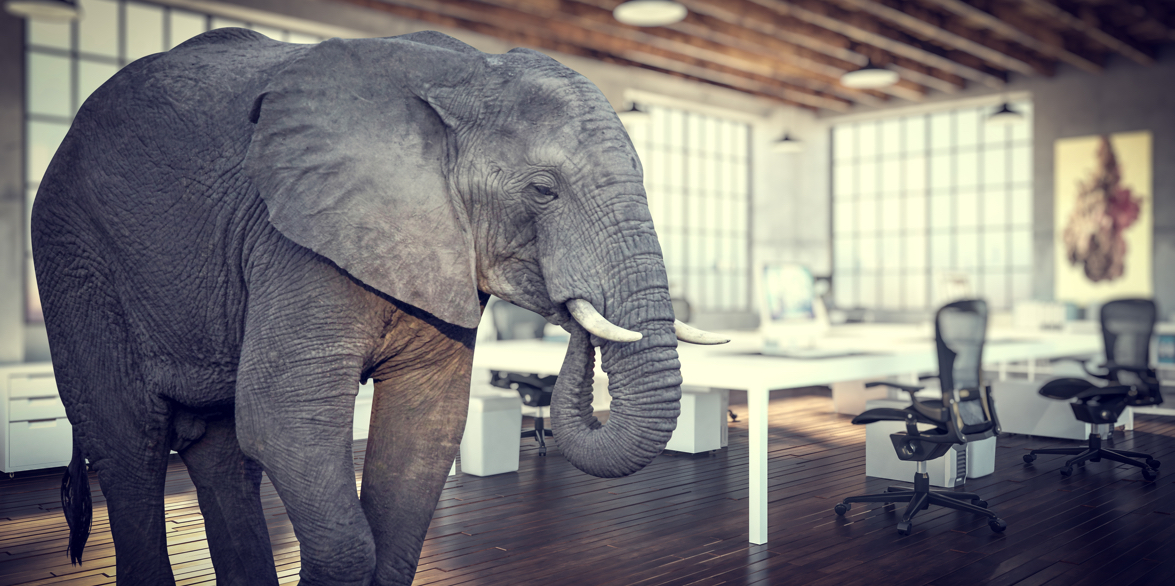 An elephant in an office