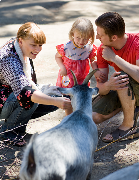 A smiling family of three petting a goat at a petting zoo