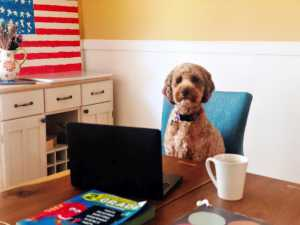 a dog sitting at a desk with a laptop computer and a coffee mug