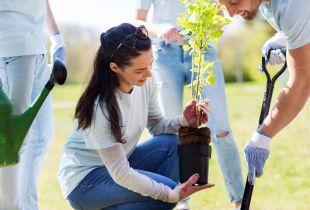 Un bărbat poartă mănuși de grădină pentru a săpa o groapă cu o lopată, în timp ce o femeie se pregătește să planteze un copăcel. Două persoane parțial vizibile ce poartă blugi apar pe fundal și privesc.