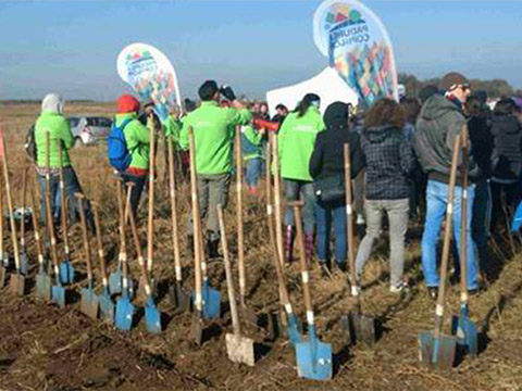 A row of shovels standing upright in the ground at a tree planting campaign
