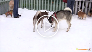 Summer Snow Day Video at Unleashed by Petco