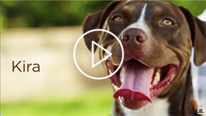 The Story of Kira Service Dog