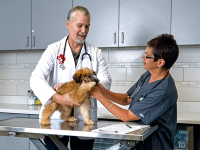 Veterinarian Holding Dog
