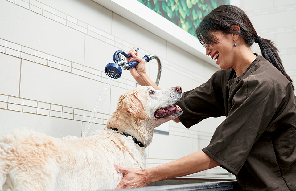 A dog stands in a washing station, looking happy, while a Pet Salon Apprentice rinses him with water.