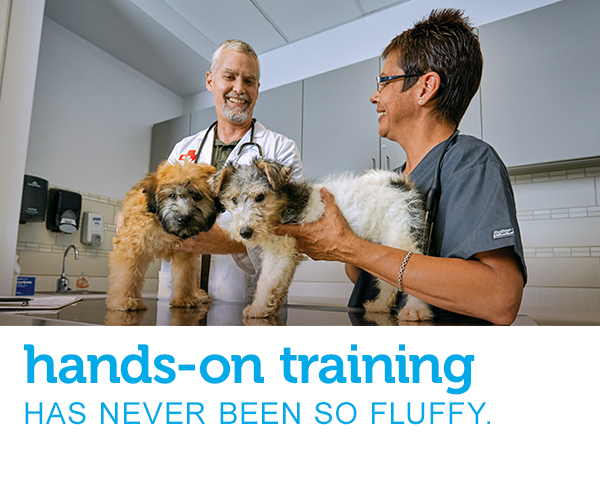 "A male veterinarian and a female veterinary assistant talking while working with two fluffy puppies on an exam table. Text across the image reads ""hands-on training has never been so fluffy."""