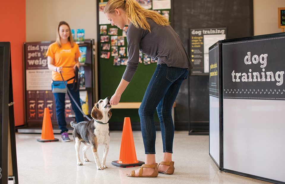 A woman gives her dog a treat for coming when he's called during a training class. In the background, a female Dog Trainer holds his leash.
