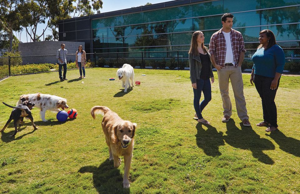 A diverse group of coworkers are gathered in one of Petco's grassy dog parks while their dogs run around and play with toys.