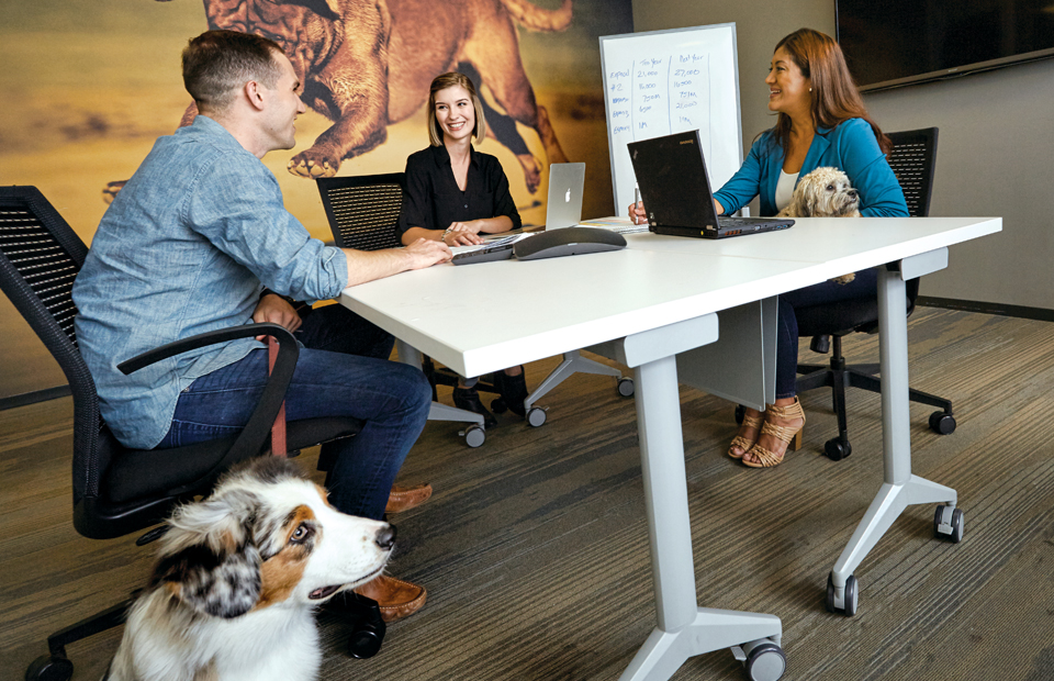 A diverse group of three coworkers are talking in a conference room with two of their dogs in attendance. There's a huge mural of a running dog in the background.
