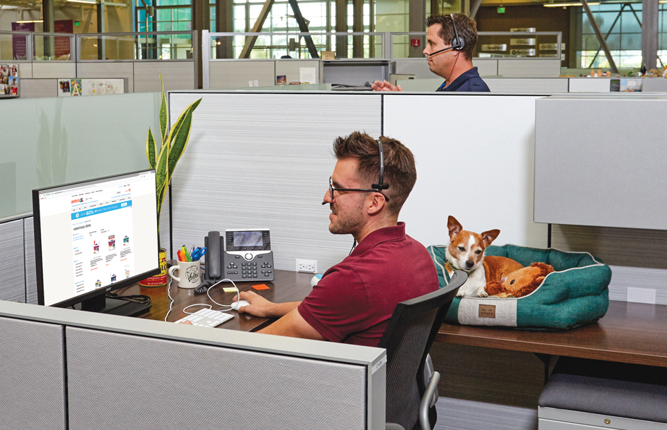 Seated male Call Center employee wearing a headset in his cubicle, helping a customer on the phone, while his own little dog is curled up in his dog bed on the desk next to him. Another call center employee is talking in his headset in the background.