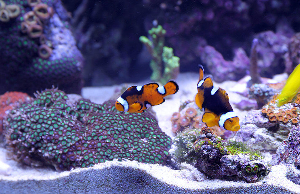 A close-up view of a busy aquarium, with colorful fish, plants, and corals.