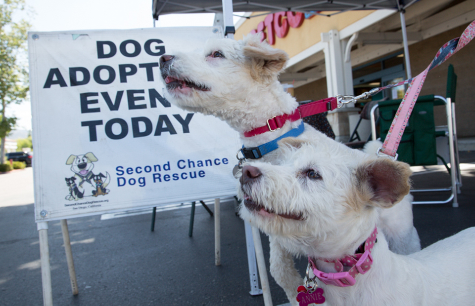 Two small white terriers looking very excited, with a sign reading Dog Adoption Event Today behind them.
