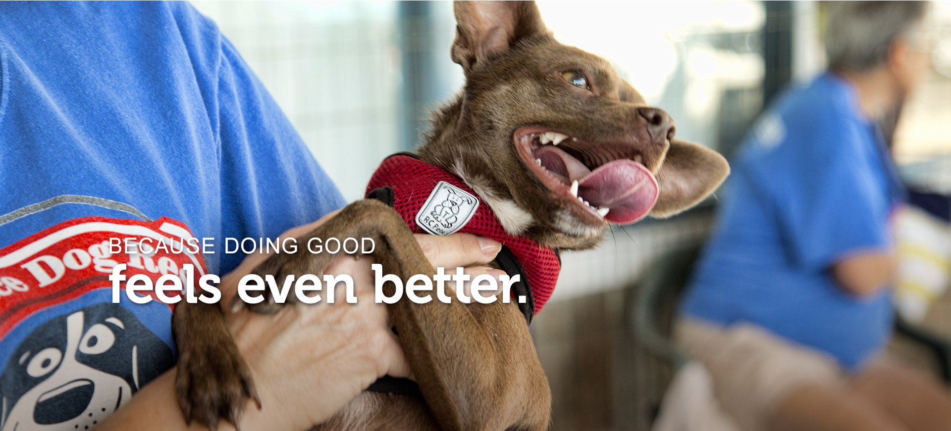 "A little Chihuahua with his tongue out and mouth open is being held at a Petco Foundation adoption event. Text across the image reads, ""because doing good feels even better."""