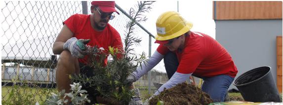 employees planting a sapling