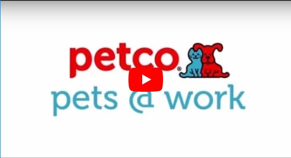 Petco corporate careers thumbnail