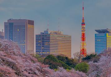 Torre de Tóquio, cercada por prédios e flores de cerejeira em plena floração