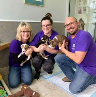 three ADP volunteers holding adorable puppies