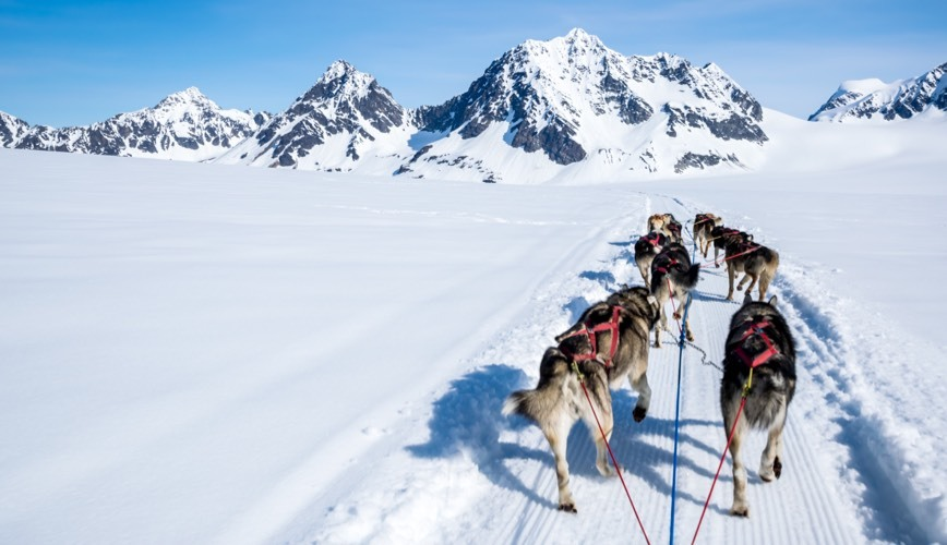 Sled Dogs and Support